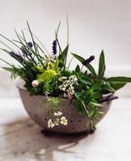 Vintage strainer full of herbs and herb flowers Kuvituskuvat