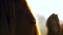 Eye of brown horse on green meadow - stock footage