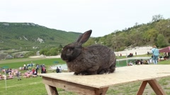Rabbit in the exhibition - stock footage