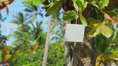 White blank card hanging and swinging from tropical tree 6 Stock Footage