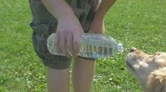 Owner Pouring Water For Golden Retriever Dog To Drink Stock Footage