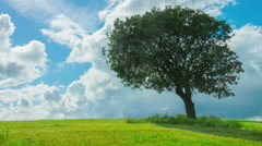 Time-lapse of green tree growing alone in field, clouds flying in blue sky Stock Footage