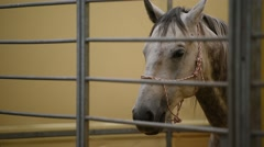 White horse inside a pen Stock Footage