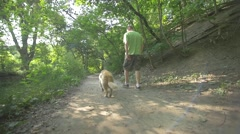 Golden Retriever Dog Walking With Owner Along Forest Path In Summer Stock Footage