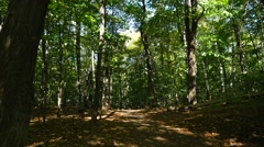 Close up tree reveals a shadow filled green forest and a path Stock Footage