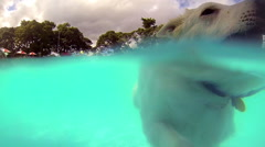 Dog swimming in pool, underwater and above water footage, slow motion. Stock Footage