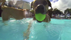 Dogs swimming in pool, underwater and above water footage, slow motion. Stock Footage