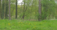 High Deciduous Trees Grow Near to Bank of a River Stock Footage