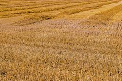 Harvesting cereals ,  Agriculture Stock Photos