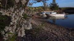 Wind shakes blooming tree branch in a small bay in Greece Stock Footage