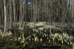 Swamp spring   season Kuvituskuvat