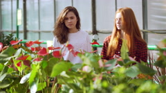 Beautiful girl in a garden and flower shop Stock Footage