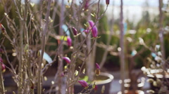 Blooming trees in a garden and flower shop. Close up Stock Footage