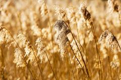 Dry grass autumn Stock Photos