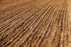 Farm field cereals Stock Photos