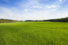 Field in spring Stock Photos