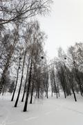 Treetops  winter season Stock Photos