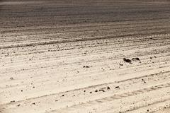 Empty agricultural field Stock Photos