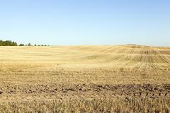 agricultural field, cereals - stock photo