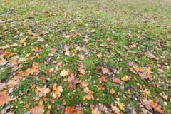 Autumn Park, overcast  d - stock photo