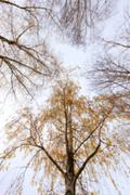 Autumn Park, overcast Stock Photos