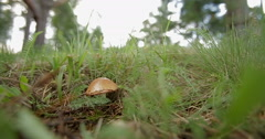 One mushroom in the moss Stock Footage