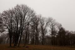 Autumn Park, overcast - stock photo