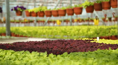 Crop production in greenhouses Stock Footage