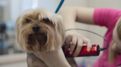Dog Beauty Salon Stock Footage