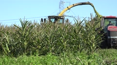 Combine harvest and load maize corn against blue sky. 4K Stock Footage