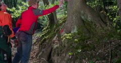 Marking a tree with red colour Stock Footage
