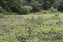 Branches fallen on grass at park Stock Photos