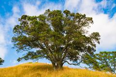 Single Tree Standing Alone Stock Photos