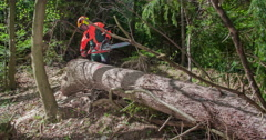 Pinning a logger tape on a tree trunk Stock Footage
