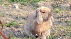 Small brown rabbit running in garden Stock Footage