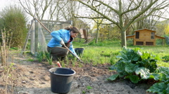 Gardener removes weeds in garden Stock Footage