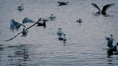 Seagulls Jostling For Food On The Water Stock Footage