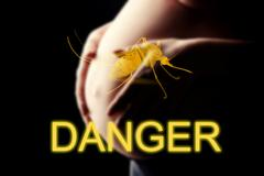 Pregnant woman, imminent danger to the virus Zika, DANGER Stock Photos