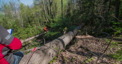 Logger is sitting on a tree trunk and is writing something down Stock Footage