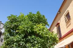 Classic Andalucian Spanish house and tree - stock photo
