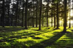 Forest with sun rays Stock Photos