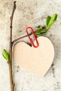 Young tree branch with paper heart Stock Photos