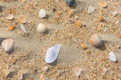 Several multi-colored sea shells lie on the sea sand - stock photo