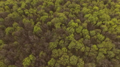 Spring forest from the air Stock Footage