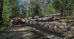 Lifting up in the air a big tree trunk - stock footage