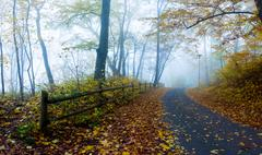 Twilight in autumn forest Stock Photos