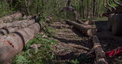 Putting a big tree trunk on a pile with other trees - stock footage