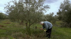 Elder farmer at his olive tree field using a pickax,ploughing. Stock Footage
