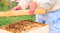 Beekeeper open the hive and smoke a bees Stock Footage