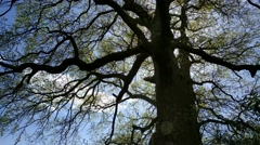 silhouette whimsical tree against blue sky - early spring - stock footage